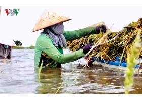 MÁY BƠM NƯỚC là một trong những phương án đối phó sự cố vỡ đập thủy điện ở Lào của các tỉnh ĐBSCL
